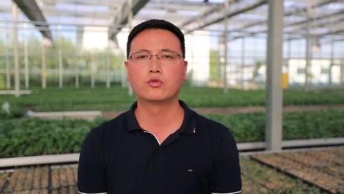 实拍临颍豫禾农业智能温室大棚