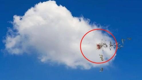 """原来云彩这么硬?每年500多万只鸟""""撞云而亡"""",真相让人傻眼"""