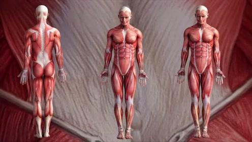 哥伦比亚大学发明出人造肌肉,用在机器人身上,可提起千斤重物品