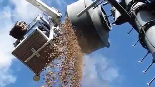 工人清理信号塔时,竟发现全是松鼠藏的坚果,数量非常惊人