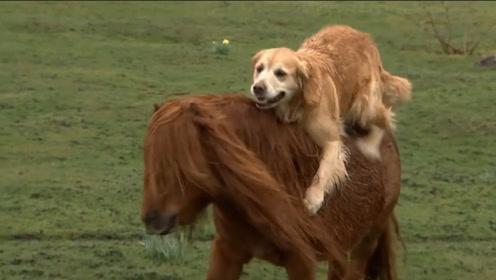 狗狗看到主人车马奔腾,也想体验一番,大家忍住不要笑!