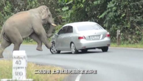 大象拦下汽车,一脚把轮胎踩扁,扒下引擎盖扬长而去