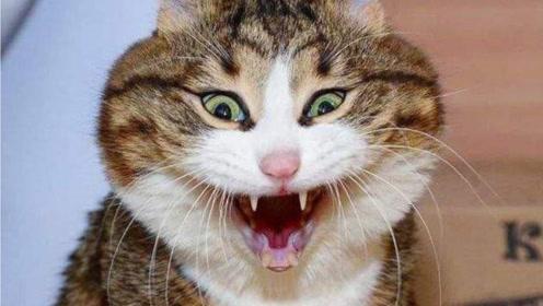 猫精附体?男子说猫语38年半夜真相被发现