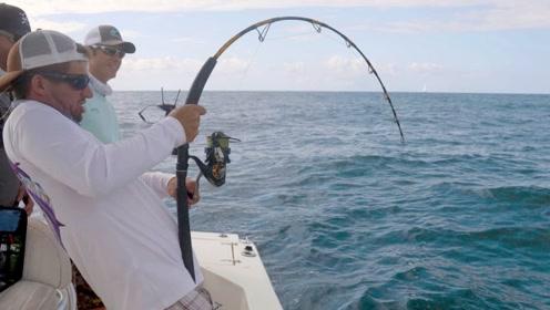 捕鱼日常,再强的猎手也有失败的一天,那么会不会是今天