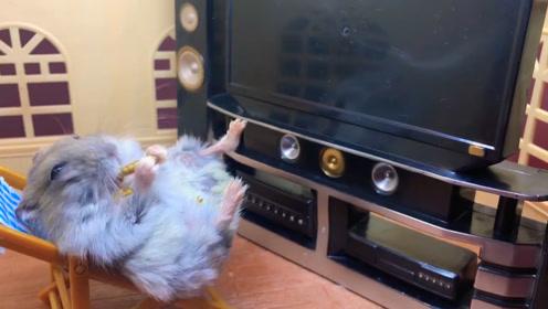 小仓鼠躺在躺椅上开心的吃着零食,开心的像个孩子!