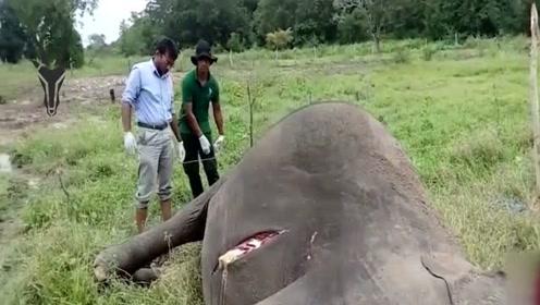 为何大象的尸体不能碰,看到这人的下场,你就明白了!