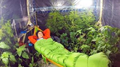老外实验放240棵植物制造氧气,10几个小时后意外发生了!