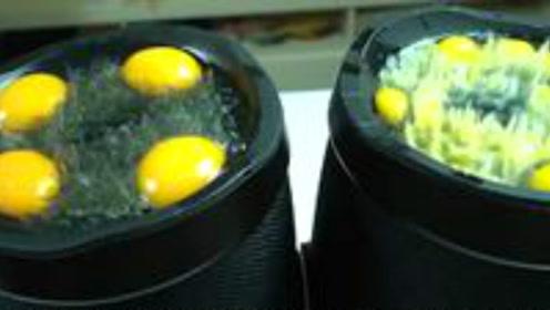 老外把鸡蛋放在音响上,会发生怎样的结局呢