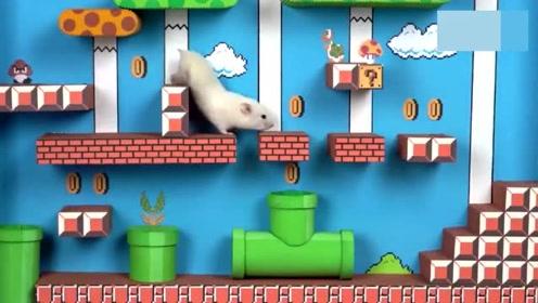 惊呆了!宠物主手艺高超,给仓鼠制作一个超级马里奥迷宫