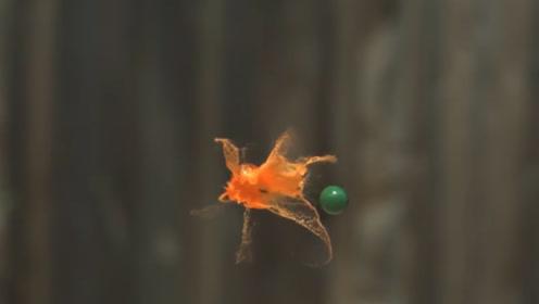 慢镜头下的彩蛋碰撞画面有多治愈?老外趣味实验,网友:巧合!