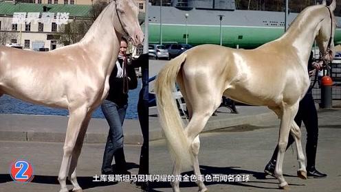6种世界上最漂亮的宝马!黄金战马比汗血宝马还珍贵!