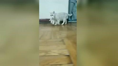 现在的猫咪是成精了吗?竟然对自己的孩子做出这事,真是活久见啊