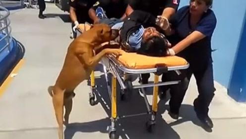 流浪汉晕倒在大街上,狗狗全程陪伴他进医院,这狗狗实在是通人性