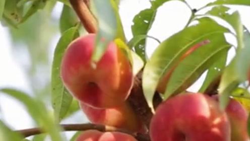 桃子坏了真的能吃?如果坏成这样的话,其实还能吃!