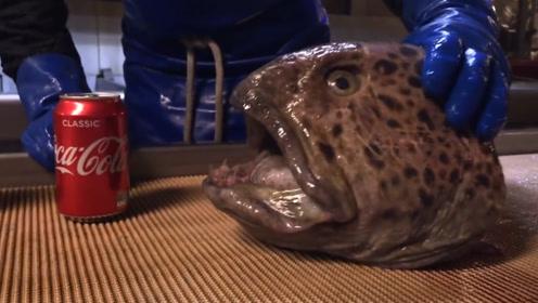 这条鱼真是太可怕了,只剩下一个头,却还能咬爆易拉罐