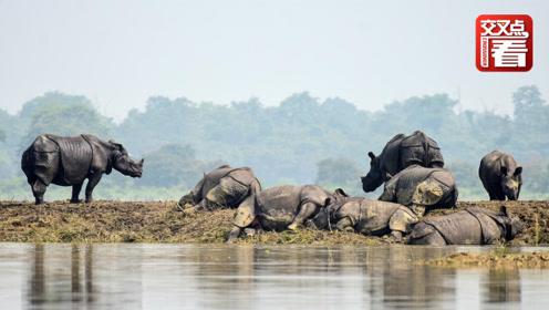 印度暴雨大得把犀牛都冲走了!动物园员工紧急下水打捞!