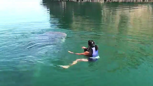 好奇女子跳下水与巨型鲸鲨互动,结果吓得尖叫连连