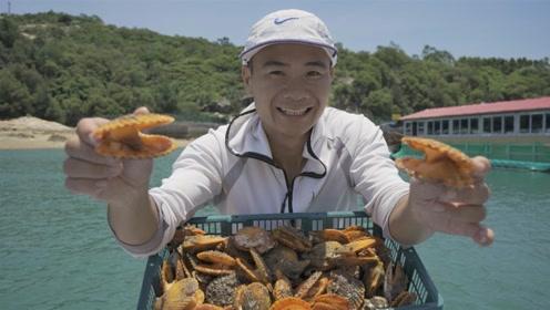 出海搞回100只特级黄金扇贝 加粉丝烧烤一次吃过瘾
