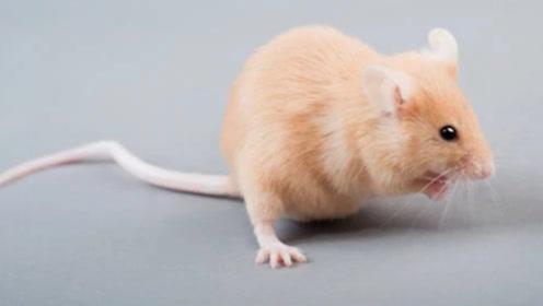 """生肖鼠要""""当心""""了!8月初有一灾,躲过就能一路顺到年底!"""