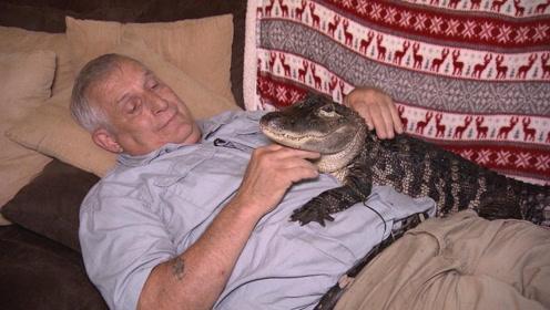 男子意外收养鳄鱼,本以为很凶猛,没想到治愈多年的忧郁症