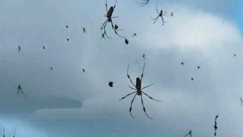 """澳大利亚下""""蜘蛛雨"""",一夜之间全城惨白,场面堪比外星球入侵!"""