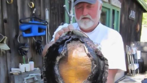 世界上最大的鲍鱼,一只足够15个成年人吃,想吃都不一定能吃到