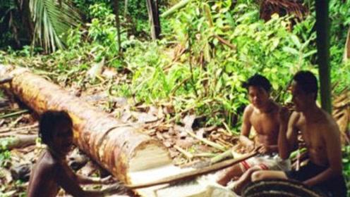 世界上最不正经的树,不产椰子只产大米,每年却能喂饱数百万人
