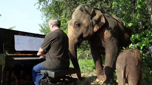 艺术家为大象开演唱会?坚持了八年,真相让人泪目