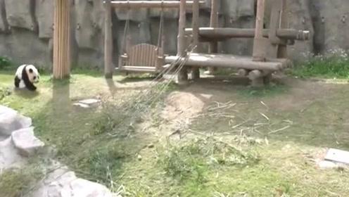 国宝熊猫雪宝巨星登场,奶妈的一声呼唤,雪宝屁颠地来了
