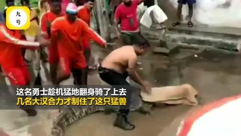 惊险!赤膊男子洪水中徒手抓鳄鱼,四五个人骑上去才制服