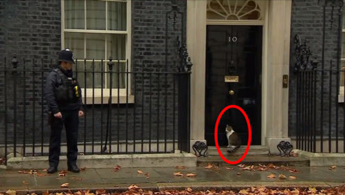 猫咪被关在门外,瞟了一眼警卫小哥,猫咪:给你个眼神自己体会