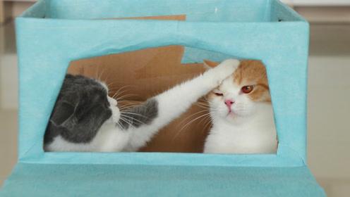 """自制豪华""""跑车"""",猫妹一爪子下去尴尬啦!"""