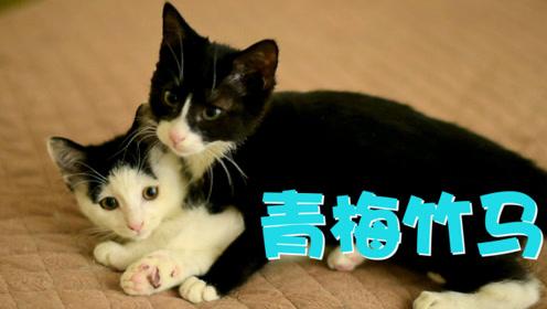 收养的流浪小母猫,居然和家里的小公猫,一见面就抱在了一起……