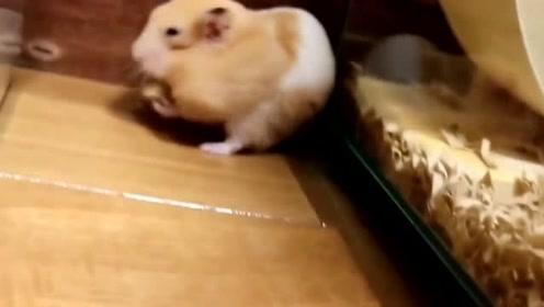 仓鼠成功偷到了食物,然后立刻一溜烟的逃走了