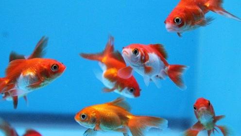 鱼的记忆只有7秒?老外亲自实验,结果出乎所有人意料!