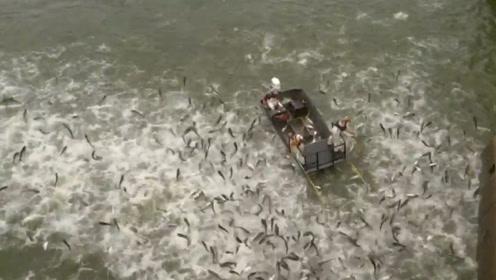 为了对付泛滥的亚洲鲤鱼,国外渔民直接出大招,镜头拍下精彩瞬间