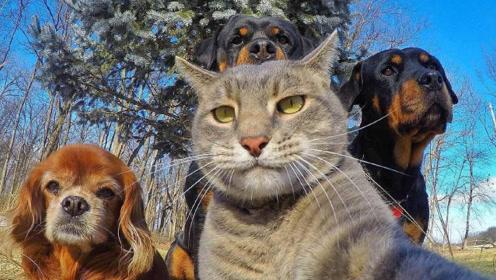 猫狗一家亲!无厘头可爱猫咪与傻狗子的故事!看过都笑了!
