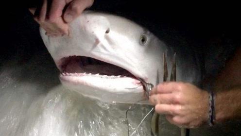 日本小哥花2万元买鲨鱼,只为了做一道菜,网友:太过奢侈了