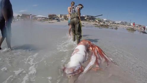 巨型鱿鱼想将男子拉下水,结果反被拉上岸,这么大一只有口福了