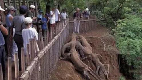 """印度出现5米长""""恐龙"""",村民无知跑来合影,专家看到后直呼快跑"""