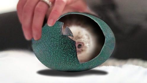 """小伙意外得到一枚""""绿蛋"""",冒险孵化50天,出壳的瞬间激动不已"""