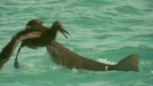 殊死搏斗!鸟儿漂浮海上被鲨鱼一口含住 用嘴猛啄一通逼退强敌