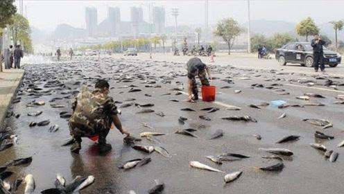 """上万条活鱼从天而降,下了一场""""鱼雨"""",不可思议!"""