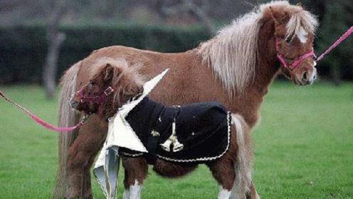 狗狗和马能结合?还一起生出的下一代,网友:这也太萌了吧