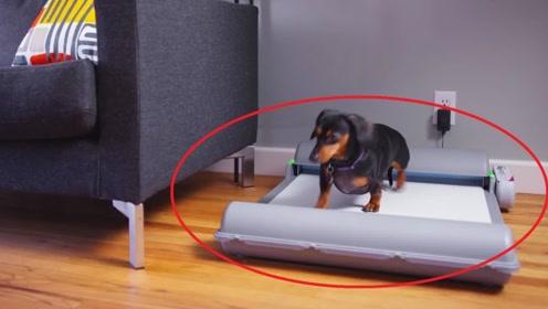像跑步机的狗狗厕所,自动清洁并隔绝臭气!一起来了解下