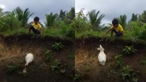 谢谢你鸭!菲律宾一男孩鞋子掉泥里 热心鸭子艰难爬坡帮忙捡回