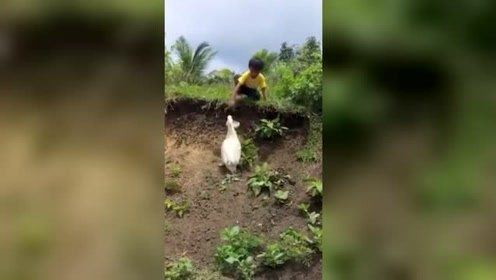 萌化人心!男孩鞋子掉泥里 热心鸭子帮忙捡回