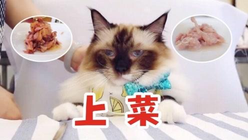 主人为猫咪把家改造成星级餐厅,戏精喵们盛装赴宴:快给朕上菜!