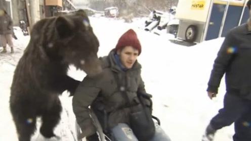 """俄罗斯男子摔断腿,棕熊""""儿子""""急忙帮推轮椅,画面太搞笑了!"""