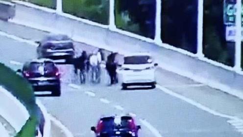 监控:5匹骏马误闯高速逆行狂奔,过往车辆纷纷左闪右避